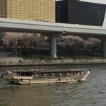 屋形船でお花見は乗合船を予約!東京スポットを徹底調査