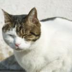 猫背を治す方法はずばり継続できるやり方がどうかが鍵な理由