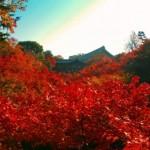 京都の紅葉見ごろの2017年ピーク時期を予想するポイント