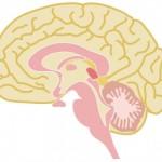 セロトニンを増やす方法は食生活と減少を抑えることが大事!